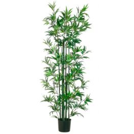 6'Bamboo Tree In Pot